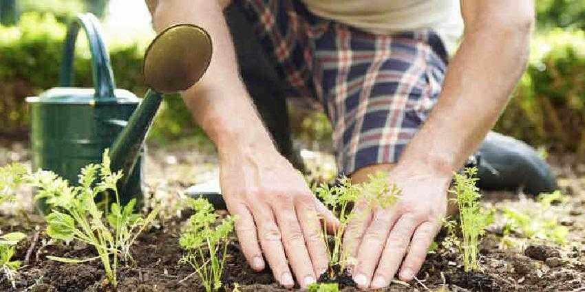 Как защитить растения