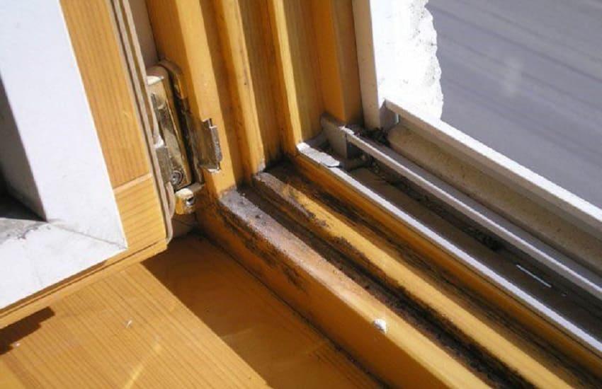 Плесень и грибок на деревянном окне